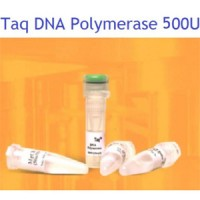 سیناژن Taq DNA Polymerase,500u -5 u/µl-TA7506C